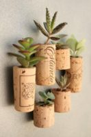 cork succulents.jpg