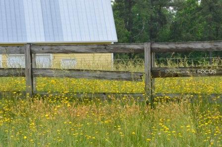 My favorite barn Raleigh Photography